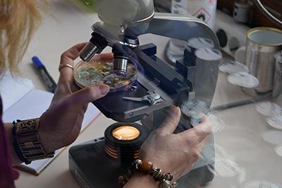 Микробиолошка анализа архивске грађе